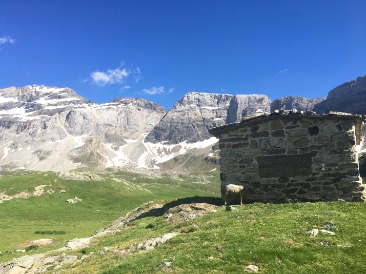 Bergerie au sommet de Troumouse